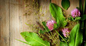 Ginsenosides: Light for cancer treatment
