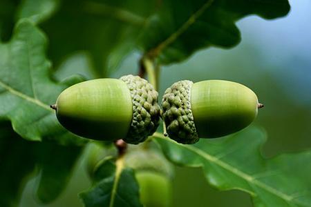 ginsenoside benefit; ginsenoside Rk1; liver cancer