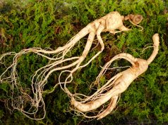Ginseng is the root of plants in genus Panax. The best ginseng extracts to buy in 2021 are those with extremely rare ginsenosides.