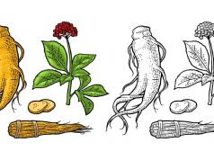 Ginseng and ginsenosides to help treat depression