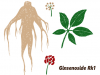 13 common questions about ginseng