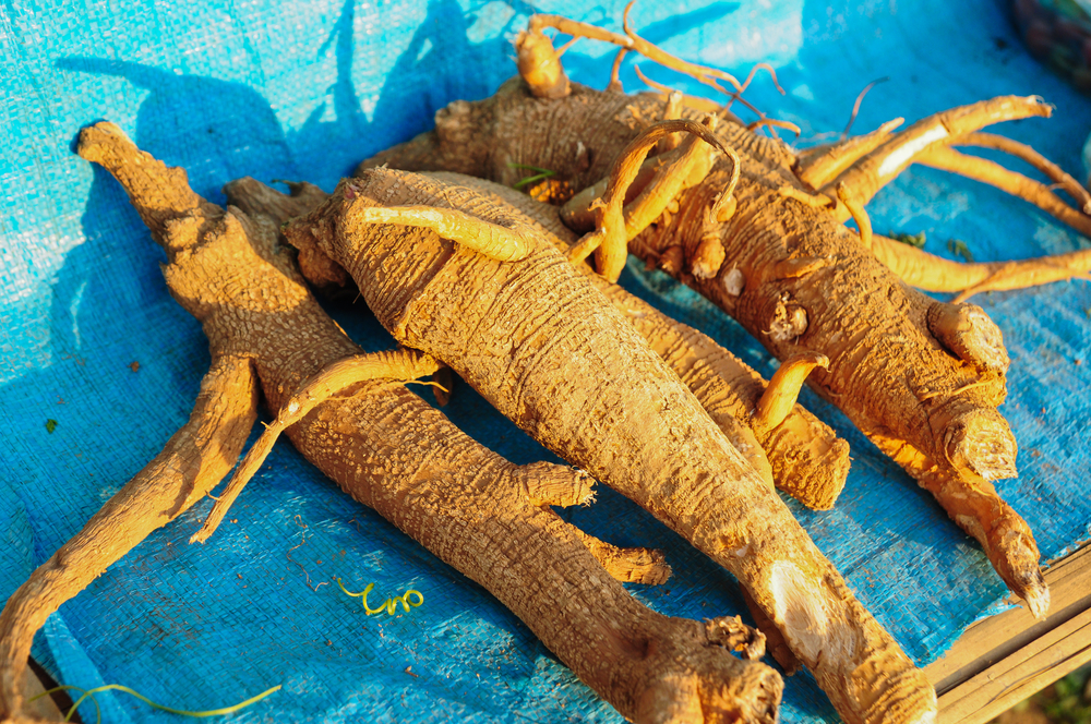 Why ginseng is so expensive?