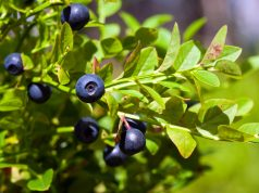 Four best fruits for cancer patients