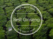 Best Ginseng Brands
