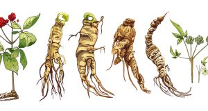 where to buy Korean red ginseng